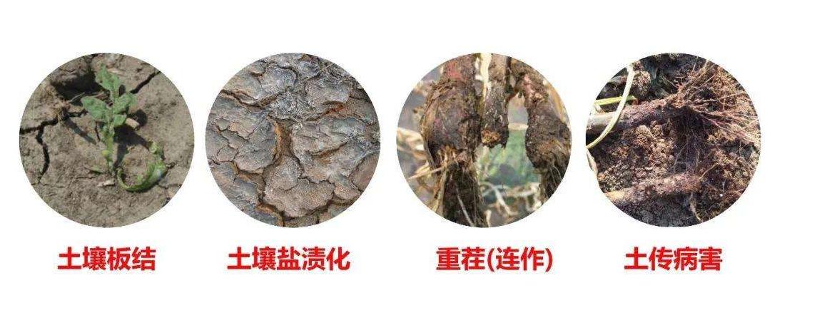 ETS贝斯特全球最奢华3322菌肥