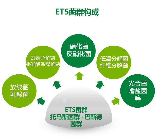 ETS菌群放线菌乳酸菌光合菌托马斯菌群
